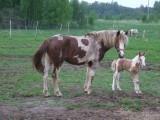 Логотип В ИЗБУШКЕ, отдых с лошадьми