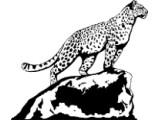 Логотип Дальневосточные леопарды, АНО