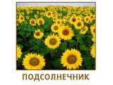 Логотип Агроресурс, ООО