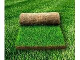 Логотип Рулонный газон