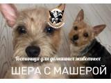 Логотип Шерочка с Машерочкой